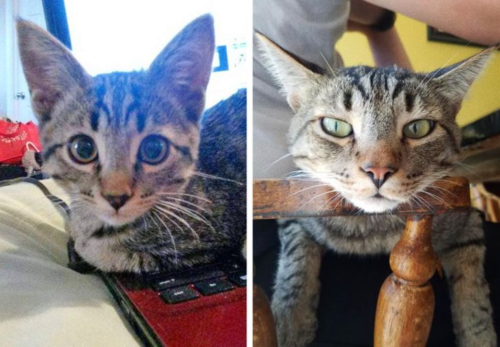 20+ Gatos inteligentes que no quisieron esperar y ellos mismos eligieron a sus dueños