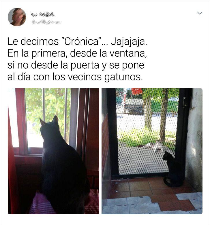 20 Creaciones (a medida) que hicieron los usuarios de Internet para que sus mascotas puedan ver lo que pasa fuera de casa