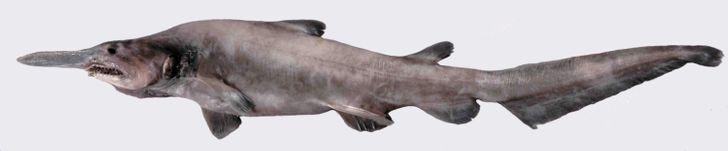 11 Animales sorprendentes hallados en la fosa de las Marianas, el lugar más profundo conocido