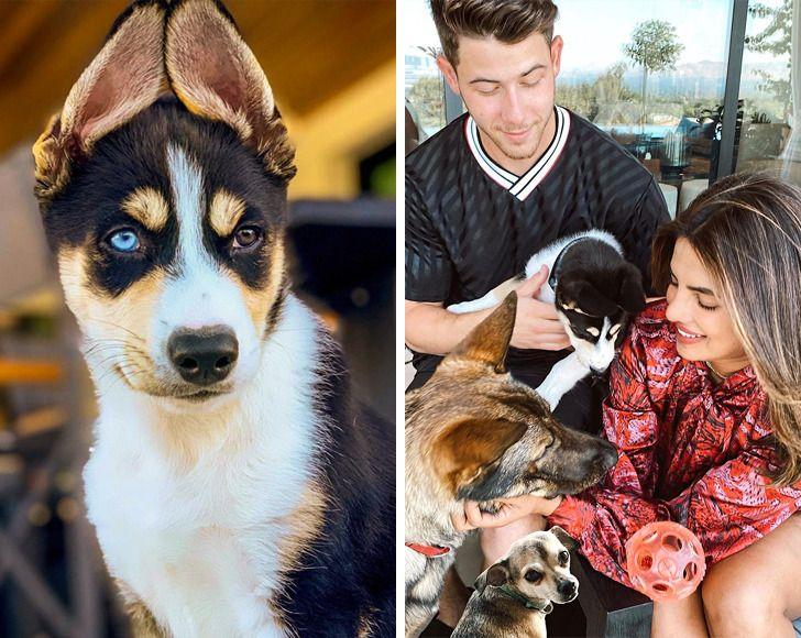 15+ Famosos que prefirieron rescatar perros en lugar de comprarlos (y les dieron una vida de reyes)