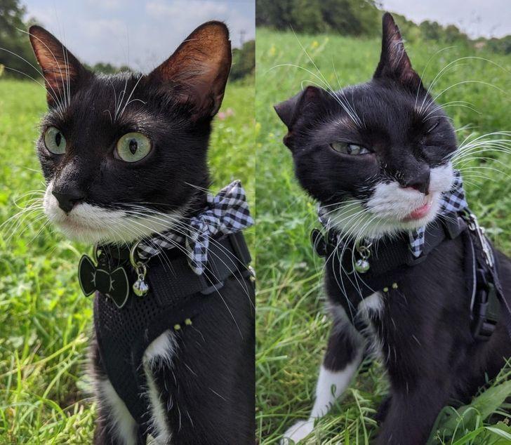 18 Animales que pueden hacerte sonreír como el gato de Cheshire
