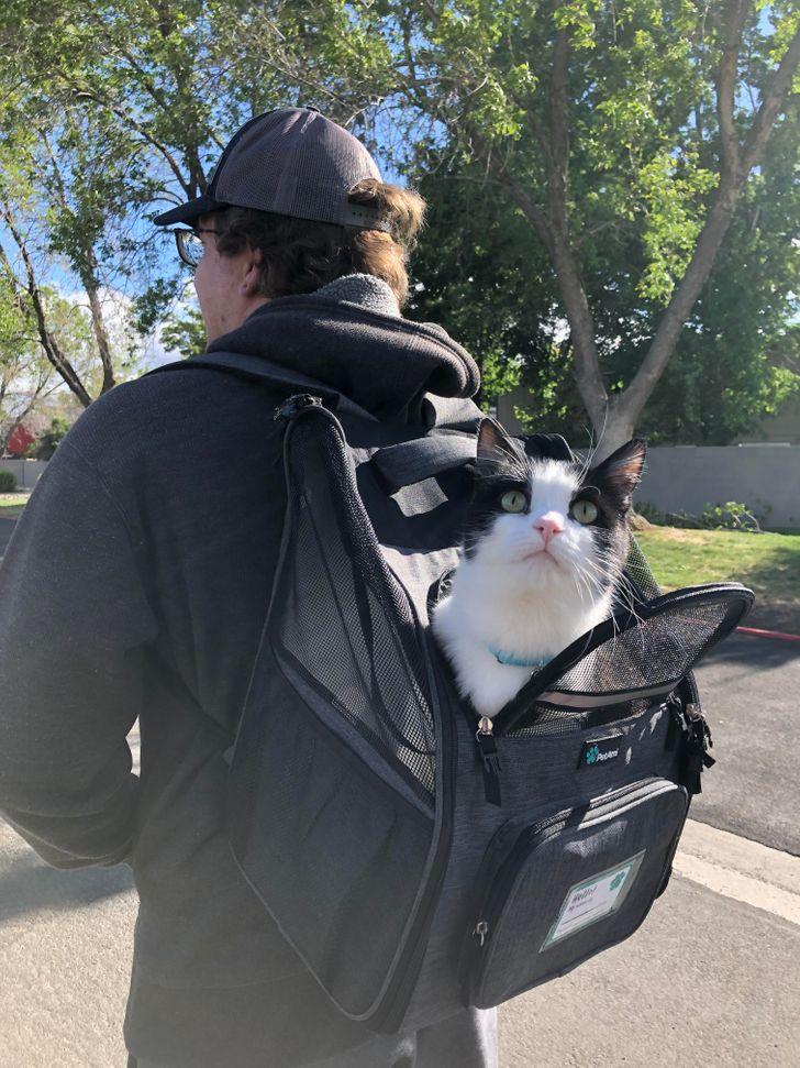 20+ Dueños que querían tener una mascota y encontraron un adorable miembro de la familia