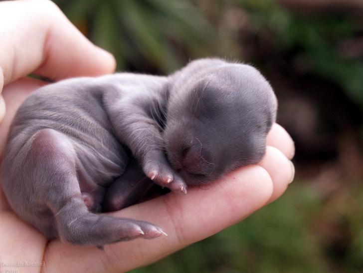 15Animales que seguramente nunca habías visto recién nacidos